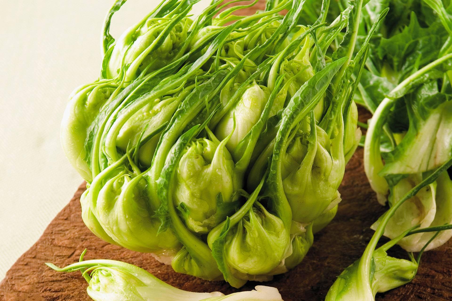 Cicoria otrantina verdura Puglia