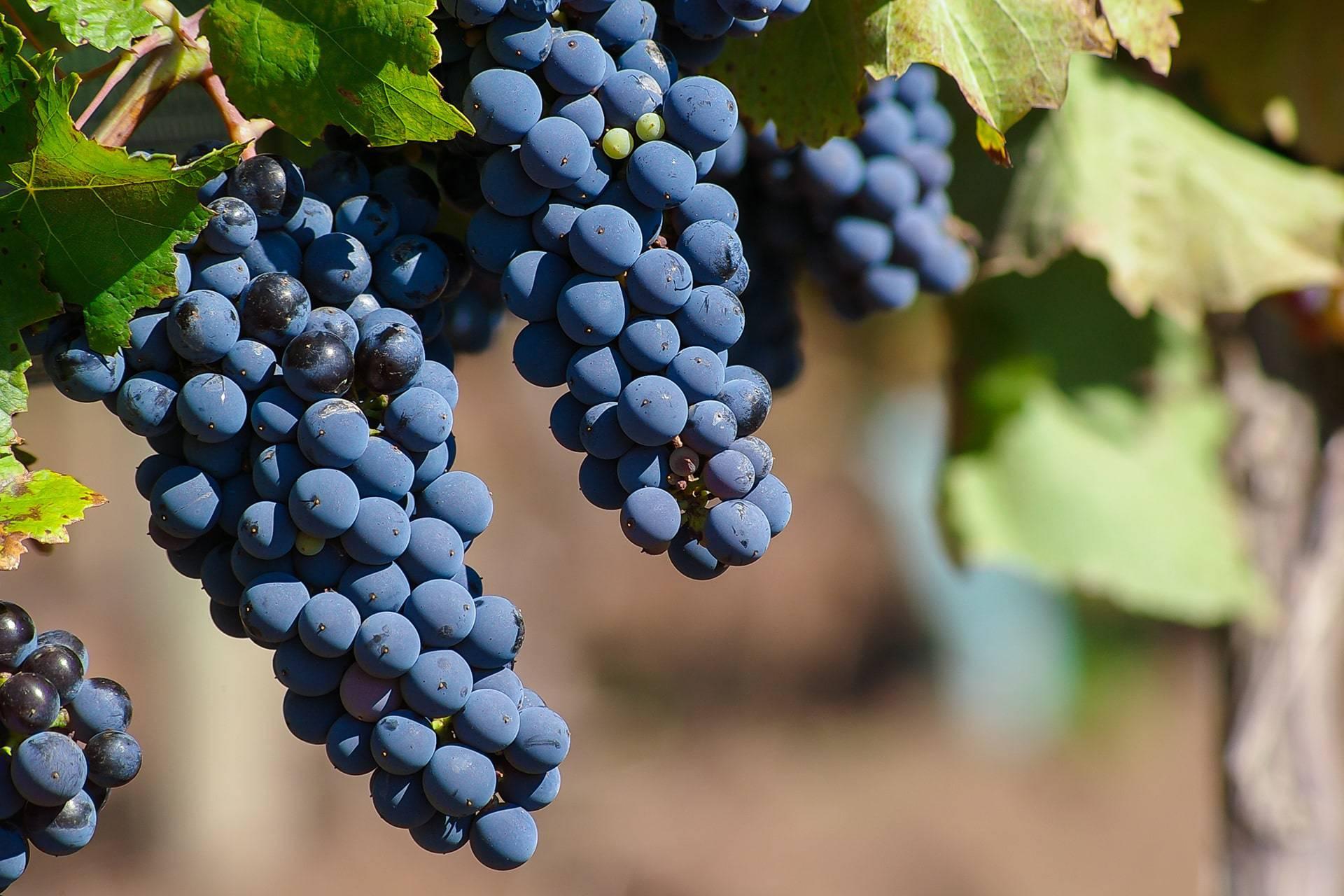 Vino Negroamaro Salento Puglia